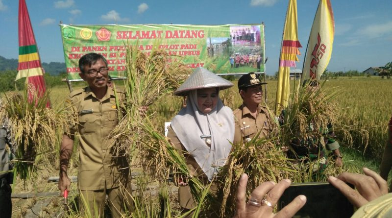 Produksi Pertanian Jadi Perhatian Sambas